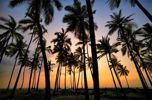 Palm Forest by Dennis Frates