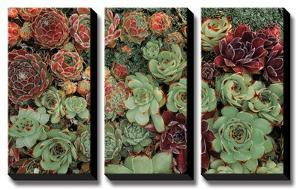 Succulent Collection by Dennis Frates