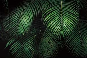 Tropical Canopies by Dennis Frates
