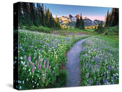 Wildflower Walkway