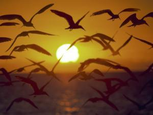Sunset and Seagulls on Green Key, Port Richey by Dennis Macdonald