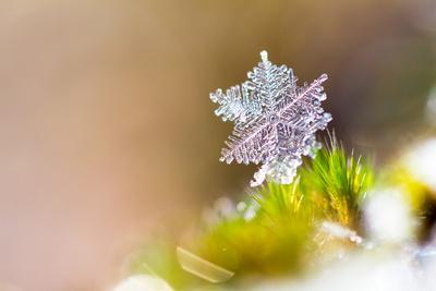 Beautiful close up Image of a Snowflake on the Ground in Nature