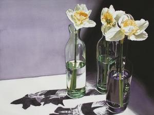 Daffodil Study by Denny Bond
