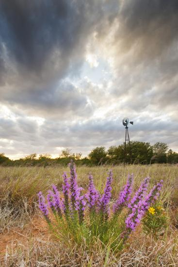 Dense Blazing Star (Liatris) and Windmill on Texas Prairie, Texas, USA-Larry Ditto-Photographic Print