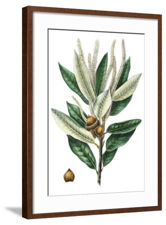 Dense Flowered Oak-Thomas Nuttall-Framed Premium Giclee Print
