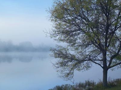 Dense Fog on Lackawanna Lake, Lackawanna State Park, Pennsylvania, Usa-Tim Fitzharris-Photographic Print