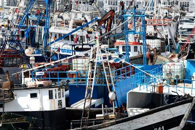 Densely Crowded Fishing Boats Moored in Tangier Fishing Harbour, Tangier, Morocco-Mick Baines & Maren Reichelt-Photographic Print