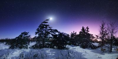Beautiful Winter Night in the Forest in Ukraine. Full Moon by Denys Bilytskyi
