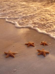 Starfish on Sand by Derek Cole