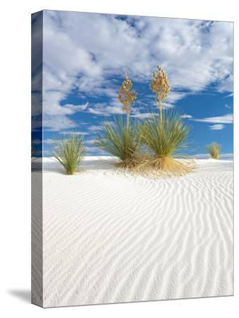 Soapweed Yucca Blooming in White Sands National Monument