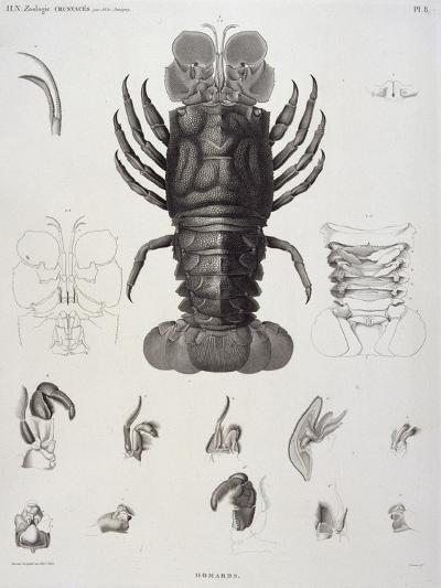 Description de l'Egypte : Zoologie, crustacé : homard-Salvadore Tresca-Giclee Print