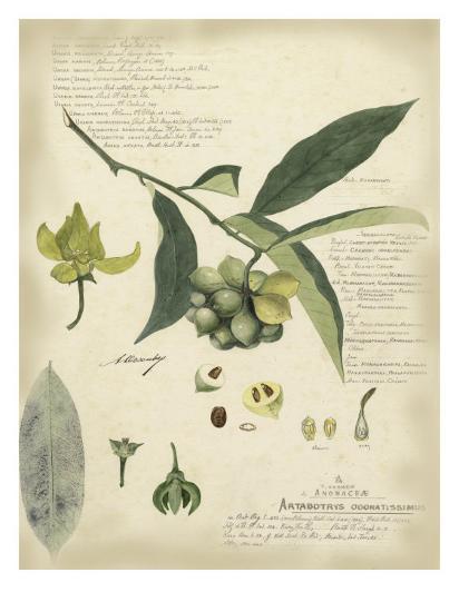 Descube Botanical II-A^ Descube-Art Print