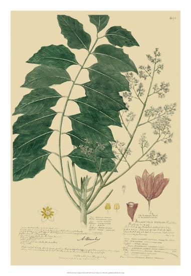 Descubes Tropical Botanical III-A^ Descubes-Giclee Print