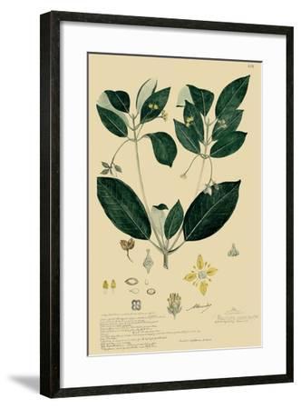 Descubes Tropical Botanical IV-A. Descubes-Framed Giclee Print