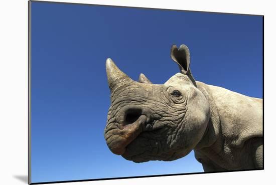 Desert Black Rhino Photographic Print by | Art com