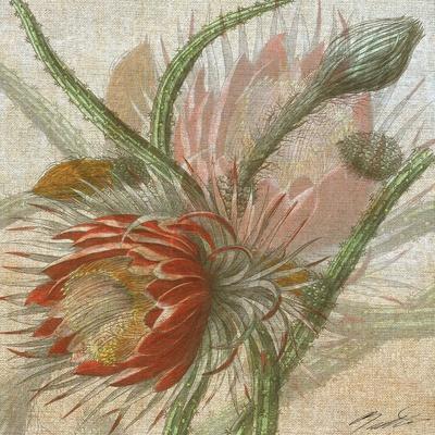 https://imgc.artprintimages.com/img/print/desert-botanicals-ii_u-l-q11auql0.jpg?p=0