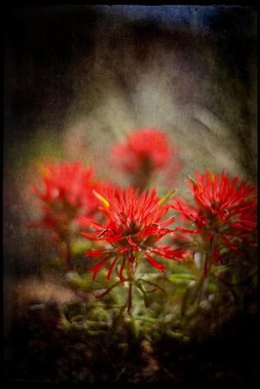 Desert Flower 1-LightBoxJournal-Giclee Print