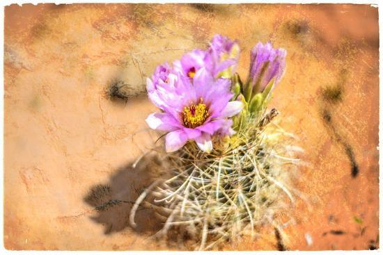Desert Flower 4-LightBoxJournal-Giclee Print