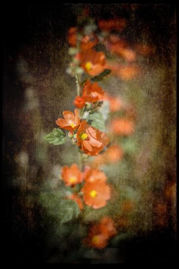 Desert Flower 5-LightBoxJournal-Giclee Print