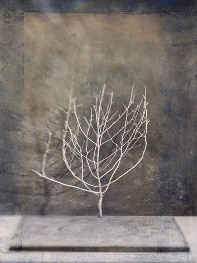 Desert Form II-Elena Ray-Art Print