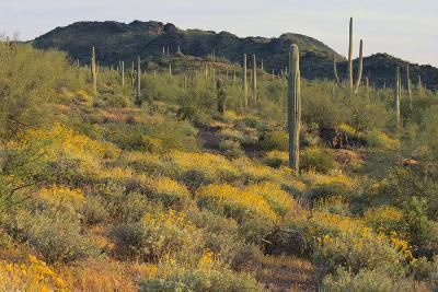 Desert Hill Covered in Scrub Plants-DLILLC-Photographic Print
