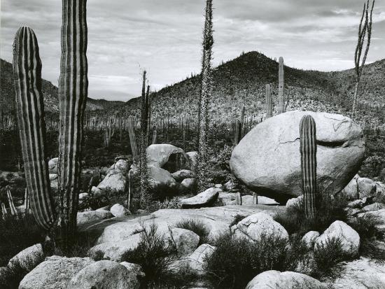 Desert Landscape, Mexico, 1967-Brett Weston-Photographic Print