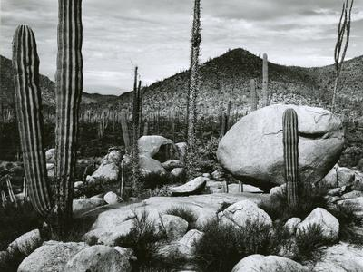 https://imgc.artprintimages.com/img/print/desert-landscape-mexico-1967_u-l-q1g6udy0.jpg?p=0