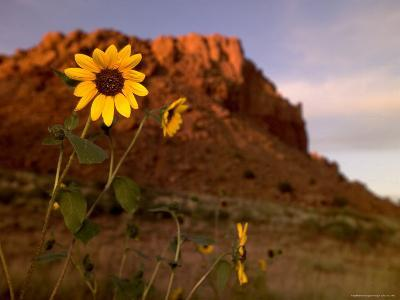 Desert Landscape with Rock Formation and Black-Eyed Susans-Raul Touzon-Photographic Print