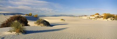 Desert Plants in White Sands National Monument, New Mexico, USA--Photographic Print