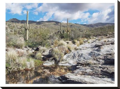 Desert Pool Oasis-Murray Bolesta-Stretched Canvas Print