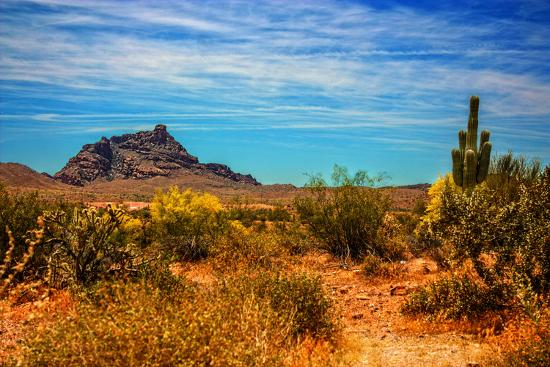 Desert Scene in Scottsdale, AZ Photo by | Art com