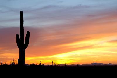 Desert Sunset with Saguaro Cactus-Christina E-Photographic Print