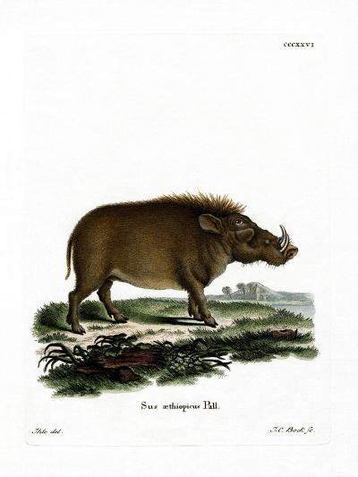 Desert Warthog--Giclee Print