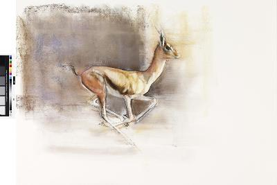 Desert Wind (Arabian Gazelle), 2010-Mark Adlington-Giclee Print