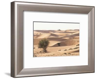 Desert with sand. Abu Dhabi, United Arab Emirates.-Tom Norring-Framed Photographic Print
