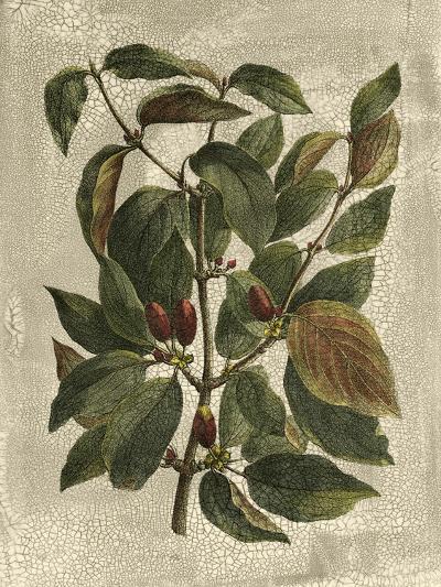 Deshayes Tree II-Gerard Paul Deshayes-Art Print