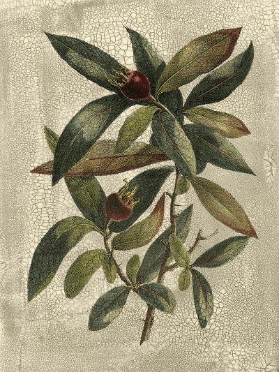 Deshayes Tree III-Gerard Paul Deshayes-Art Print