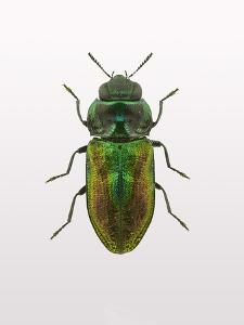 Beetle 1 by Design Fabrikken