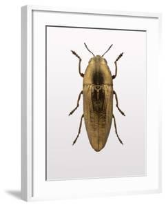 Beetle 4 by Design Fabrikken