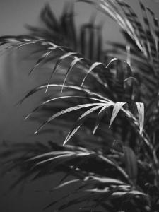 Black Plant by Design Fabrikken