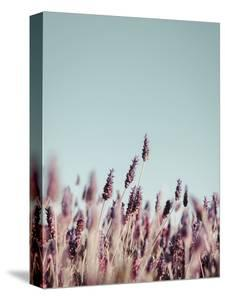 Field Haze by Design Fabrikken