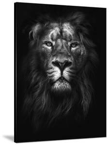 King of Kings by Design Fabrikken