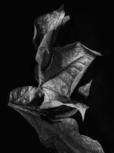 Leaf Composition, Dark by Design Fabrikken