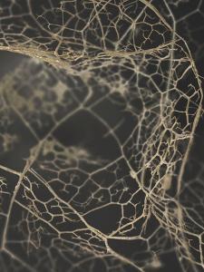 Leaf Skeleton Dark by Design Fabrikken