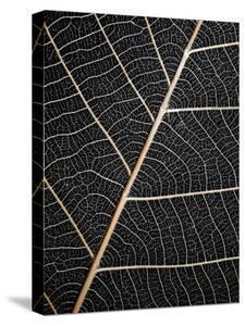 Leaf Veins by Design Fabrikken