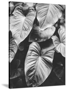Leaves of Grey by Design Fabrikken