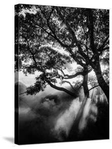 Misty Black by Design Fabrikken