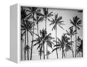 Palm Heaven by Design Fabrikken