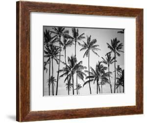 Palm Heaven by Design Fabrikken