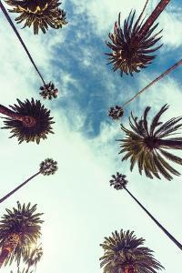 Palm Sky 2 by Design Fabrikken